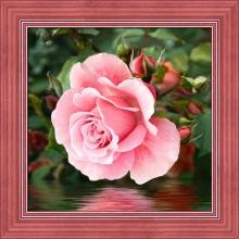 """Алмазная вышивка (алмазная мозаика) """"Розы у воды"""" АЖ-1704"""