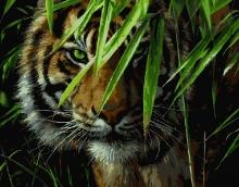 Картина по номерам Тигр на охоте 40х50см.