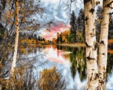 Картина по номерам Осенние березы 40х50см.