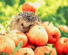 Картина по номерам Яблочный урожай 40х50см.