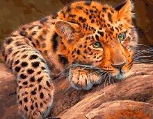 Картина по номерам Африканский леопард 40х50см.