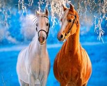 Картина по номерам Лошади зимой 40х50см.