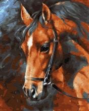 Картина по номерам Голова лошади 40х50см.