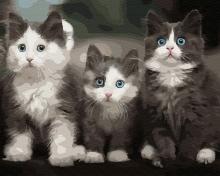 Картина по номерам Три котёнка 40х50см.