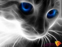 """Картина стразами (набор) """"Кошачий взгляд"""""""